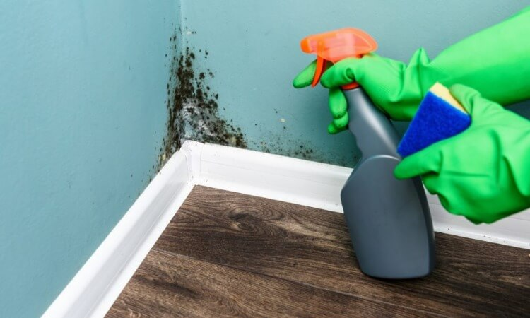 The 7 Best Products To Clean Mold And Mildew Efficiently
